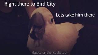 All aboard to Bird City!   Train leaves at 2!   LOL   *subtitles*