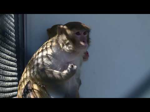 Animals in Biomedical Research BRAD Day 2018