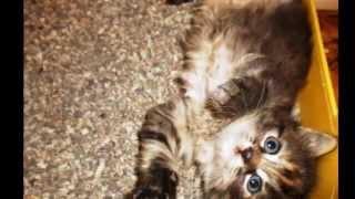 ЛУЧШАЯ ПОДБОРКА!!!ФОТО!!!КОШКИ!!!BEST COMPILATION !!! PHOTO !!! CATS !!!