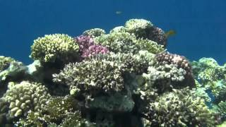 Magic World `Underwater Garden` Part IV (1080 HD)