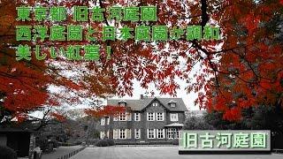旧古河庭園 2016/11/29 撮影 武蔵台地の斜面と低地という地形を活かし、...