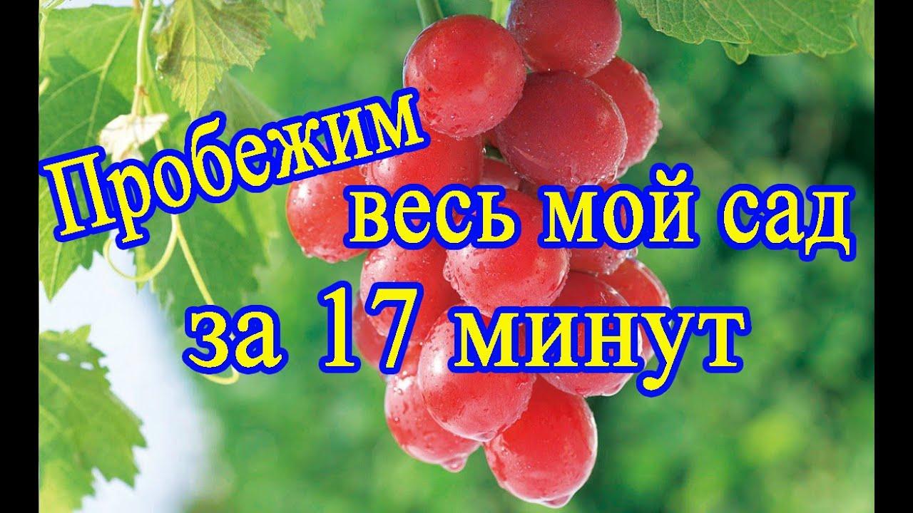 Пробежимся по моему саду за 17 минут. 1 августа 2020. Север Беларуси. Новополоцк.