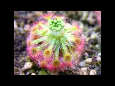 Plantas E Flores Mais Exoticas Raras E Bonitas Do Mundo Youtube