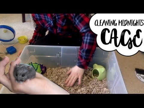 CLEANING MY DWARF HAMSTERS CAGE (old video)