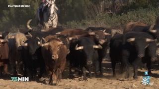 75 minutos   La cría de toros de lidia