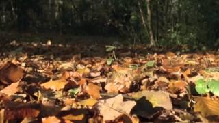 Jordi Savall & Hespèrion XXI - Folias Criollas - Peru