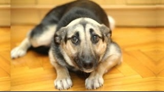 Funny Dogs Who Don't Want To Take A Bath   Try Not To Laugh BEST OF