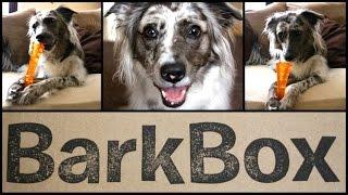 ★BarkBox★ Open Box Ruff-view w/ Guest Star BRISBANE! Thumbnail
