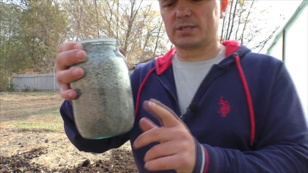 Почему у нас всегда крупный чеснок или, что внести в почву перед его посадкой.