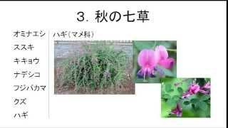 中学入試によく出る、秋の植物の解説です。