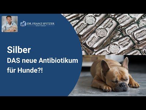 Kolloidales Silber für Hunde - die Alternative zum Antibiotikum!