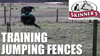 Gundog Training Tips - Jumping Fences