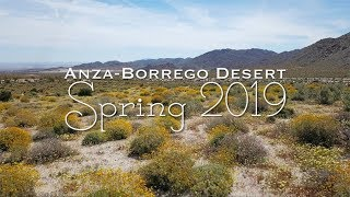 """This year the desert experienced a """"super bloom"""" of flowers. I made..."""