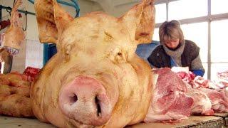 видео Почему свинина считается грязным мясом