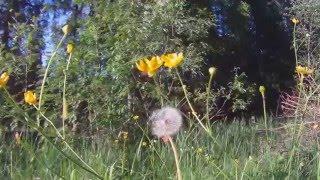 Anna kaikkien kukkien kukkia - Markku Aro
