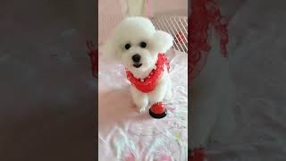 Look at these cute and funny puppies dogs 3196