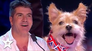 BRITAIN'S GOT TALENT Full Episode 8 SEMI FINAL AUDITIONS 2015 Season 9