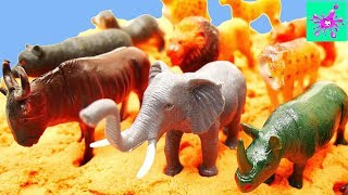 Learn Animals Compilation | Learn Wild Animals for Kids | Animal Names for Kids