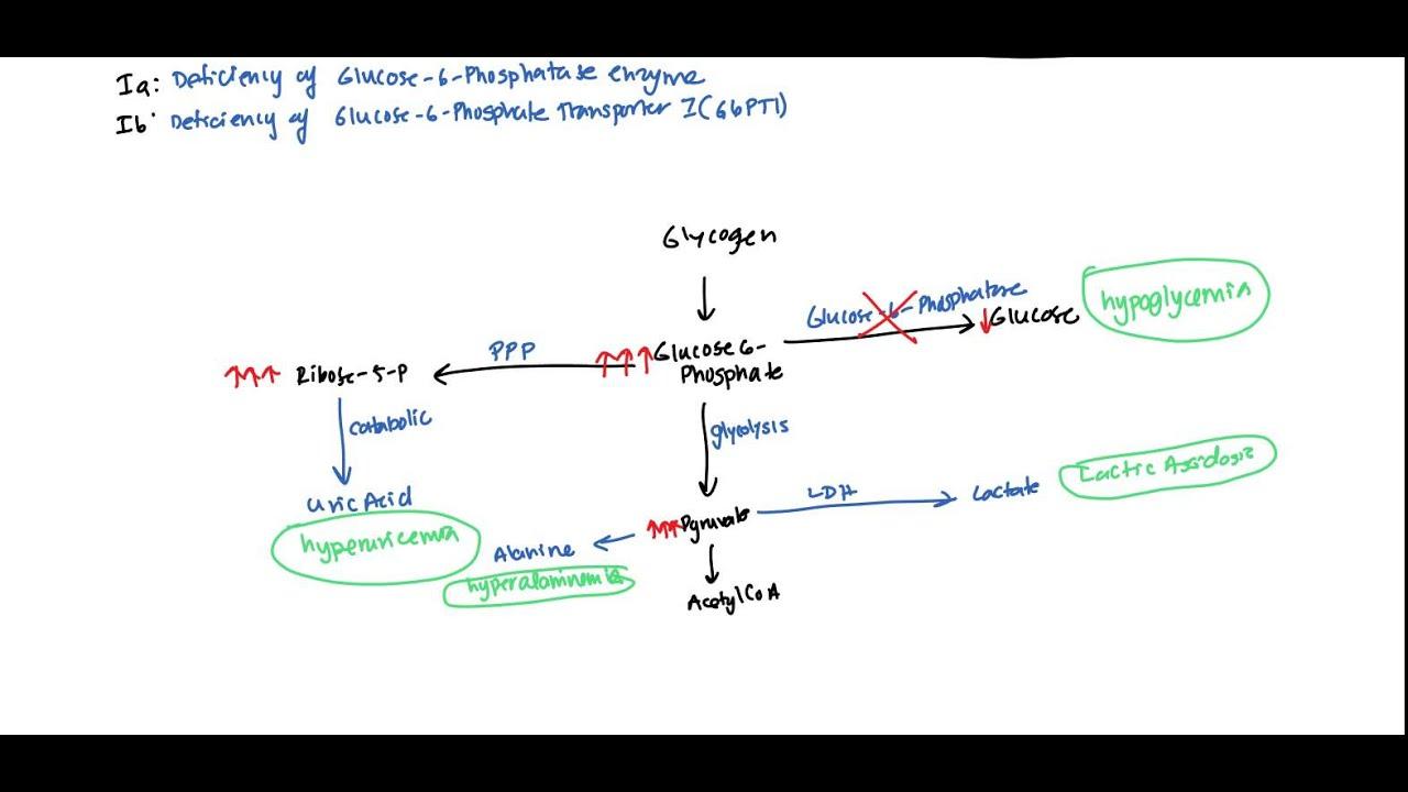 Von Gierke Glycogen Storage Disease 1 For Usmle
