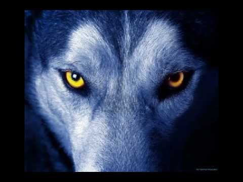 Aullido de lobo Real y musica By polo - YouTube