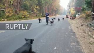 Fleeing animals find sanctuary from wildfires sweeping through California