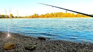 Фидерная рыбалка осенью 2019г