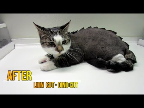 How To Groom A Cat Youtube