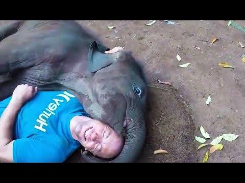 Süße und Lustige Tiervideos ( Teil 31) || ✪ Stern DuTube