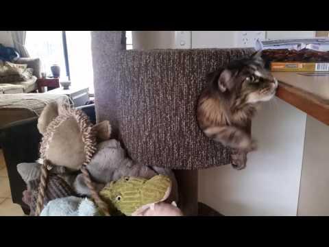 big kitty small hole?