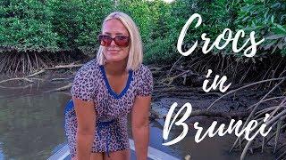 CROCODILE HUNTING   BRUNEI BOAT SAFARI