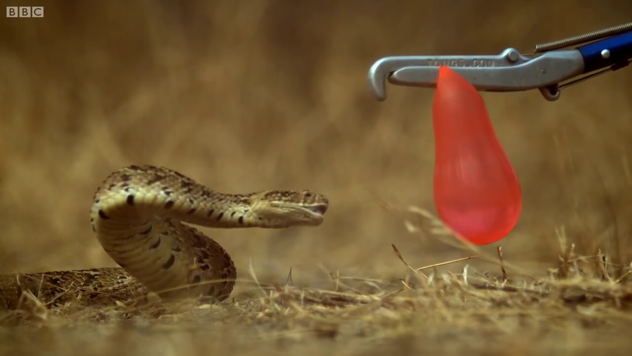 вкусу гифка змеи из мешка этого