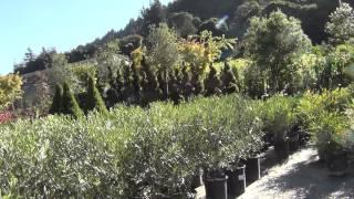 США 610: Nursery (Питомник растений) in Santa Cruz - 1(Самый информативный форум об эмиграции в США: http://www.govorimpro.us/forum MP3 файлы с нашей звуковой дорожкой: http://complife.ne..., 2013-09-08T03:07:38.000Z)