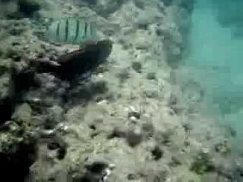 snorkeling---hanauma-bay,-oahu