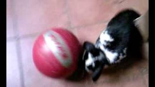 Konijn Simon aan het spelen met de bal!