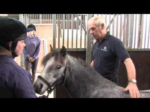 Neglected ponies given a lifeline