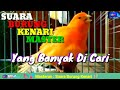 Suara Burung Kenari Master  Yang Banyak Di Cari  Mp3 - Mp4 Download