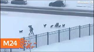 В Солнцеве на мужчину напала стая бродячих собак