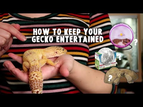 Keeping Your Leopard Gecko Entertained   Reptile Enrichment (Mental & Physical)