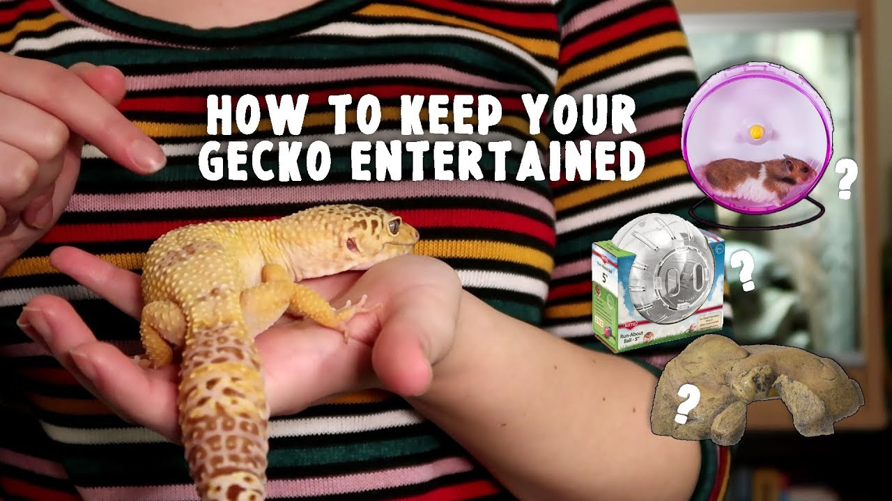 5 Reasons You Should Not Get A Leopard Gecko Youtube