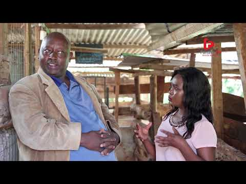 On The Farms Of Africa SN1 EP12 (Pig Farming)
