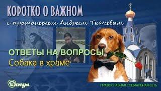 Собака в храме о. Андрей Ткачев
