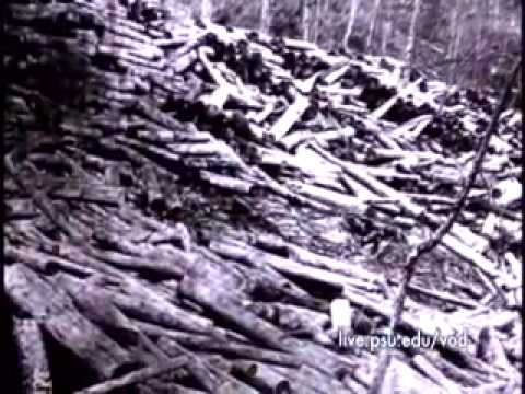 Pennsylvania Forest History