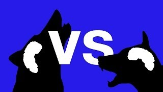 Wolves Vs Dogs - Who's Smartest? - Bang Goes The Theory - Series 6 - Bbc