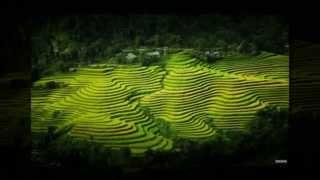 Viet Nam - Que Huong Toi (cover guitar)