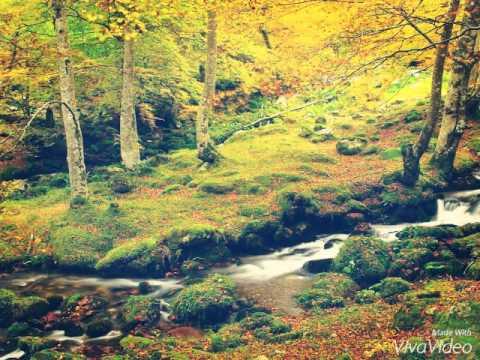 Los bosques mas bonitos de espa a youtube - Los banos mas bonitos ...