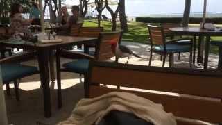 ハワイの Kahara Hotel にて。残飯を奪いにくる鳥さんが。最初は追い返...
