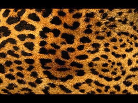 Mary-L - Body leopardo (versión española)