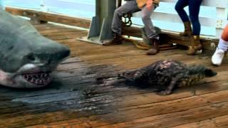 Shark Week: Snuffy Lives!