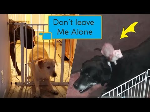 Prison Break version Animals - Funny Moments Animal - The Pet Collective SS 03