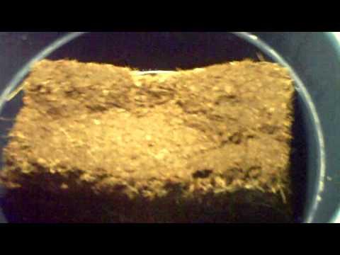 Worm Coconut Fiber Coir